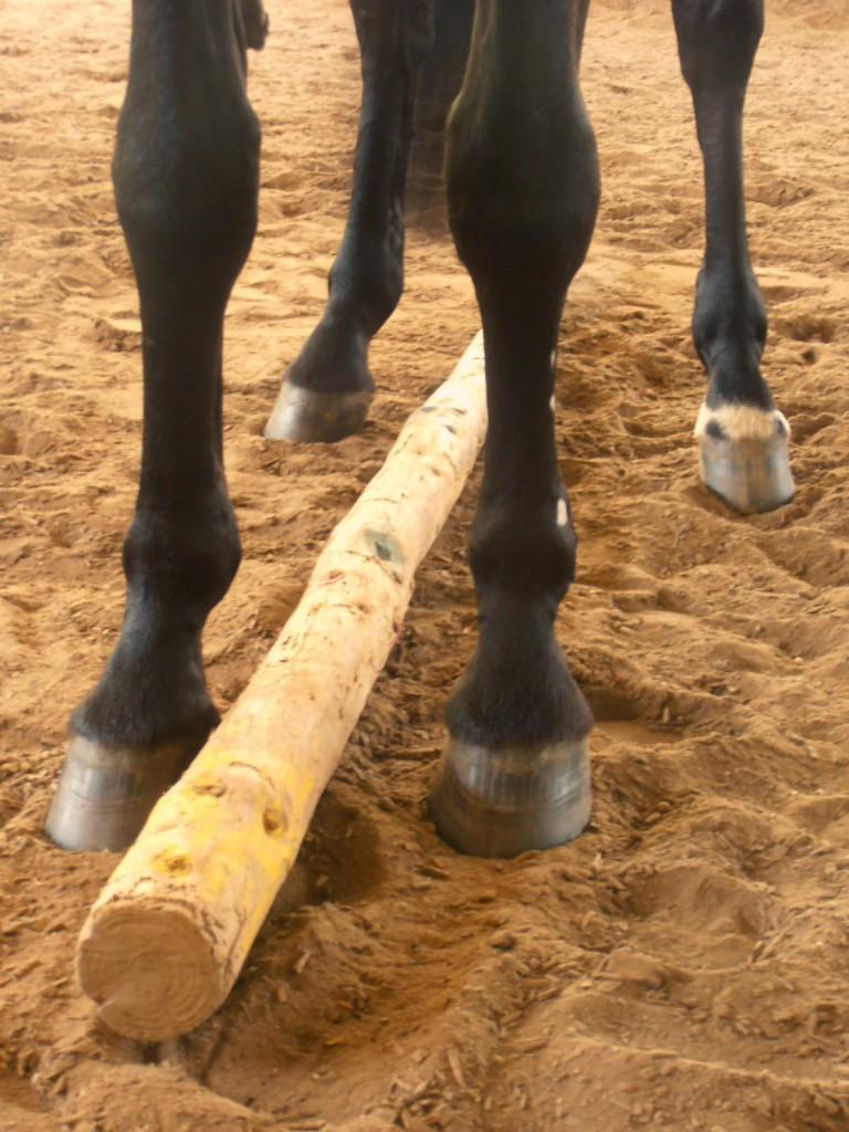 Pferde verstehen, Botschaft an die Füße