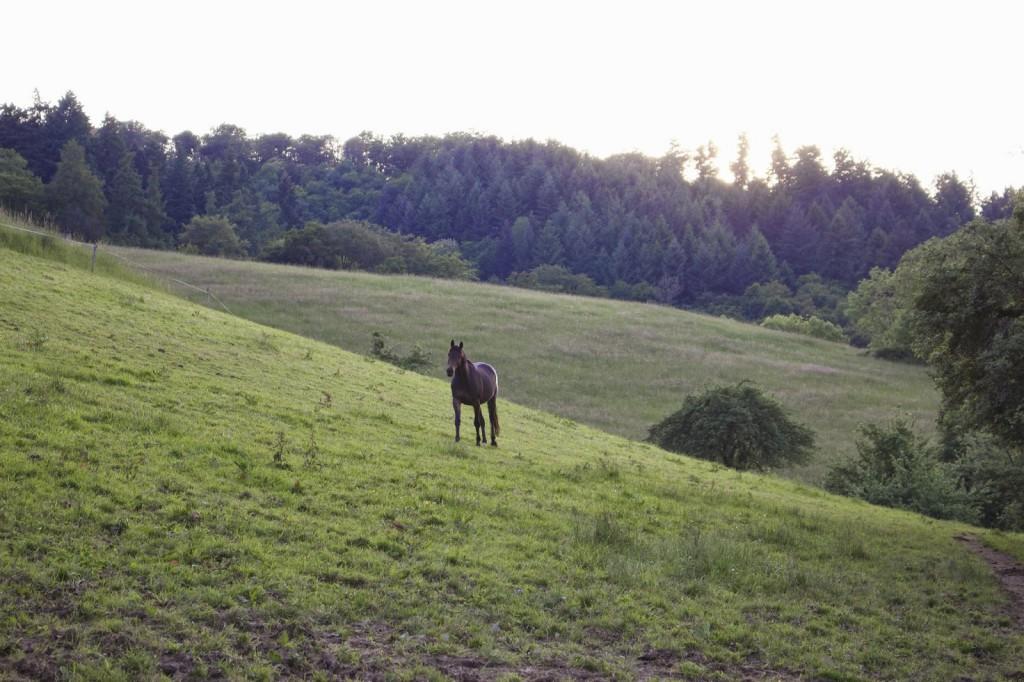 Koppel, Pferde verstehen, Respekt