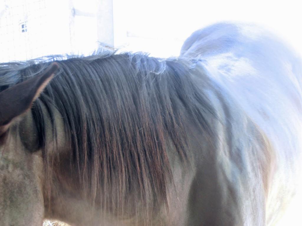 Pferde, lernen, warum