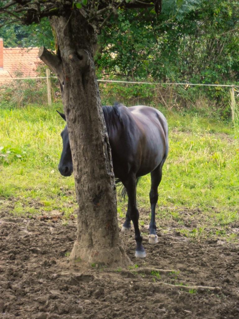 Autarkes Pferd