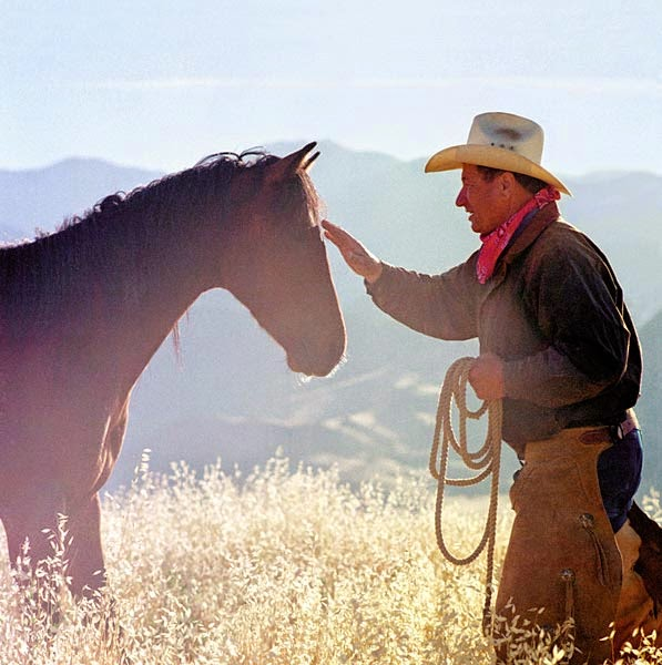 die sprache der pferde ebook