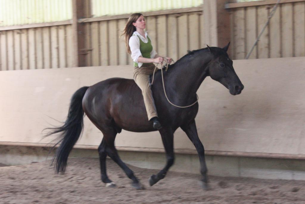 Horsemanship, Bodenarbeit, Weinheim, Nadja Müller