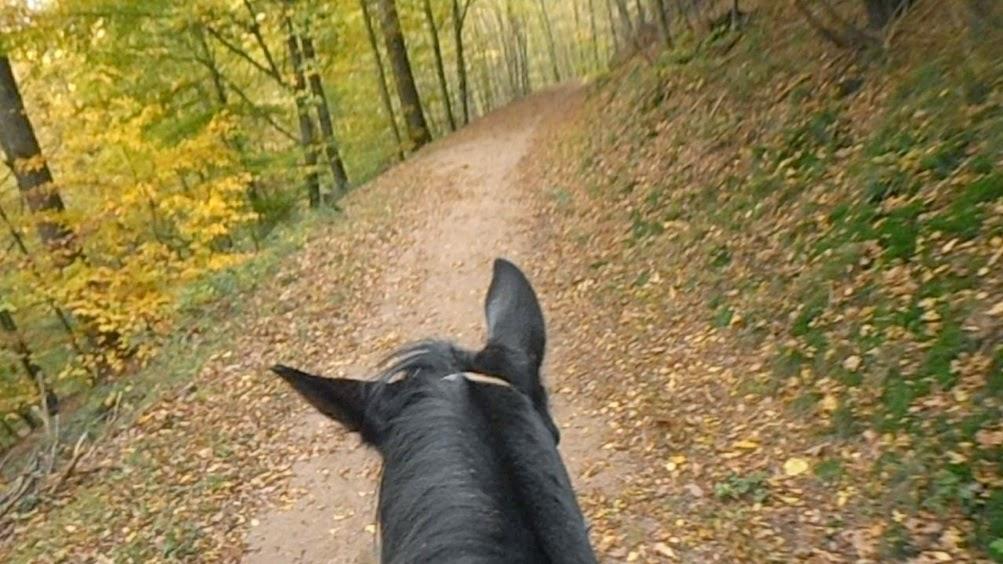 Früher war alles besser, Reiten, Pferde Verstehen Blog
