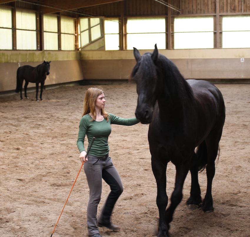 Pferdefotos, Pferde verstehen Blog