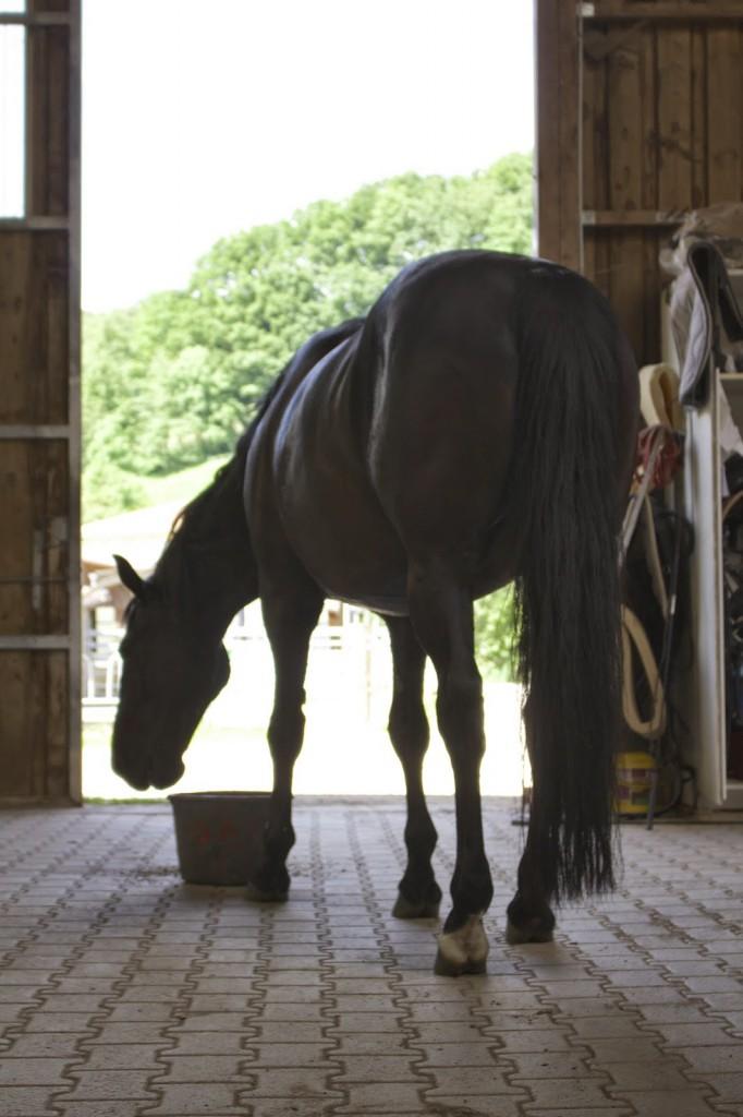 Pferde verstehen, Offenstaller, Ausreden