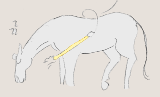 Pferde verstehen, desensibilisieren