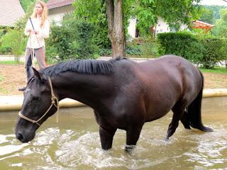 Pferdespielplatz Hasselhof