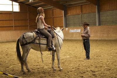 Warwick Schiller, Kurs, Muli, Pferde verstehen