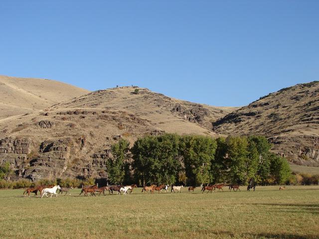 Pferde verstehen Blog: Konsequenz