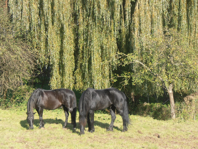 Harmonie, Pferdeverstehen