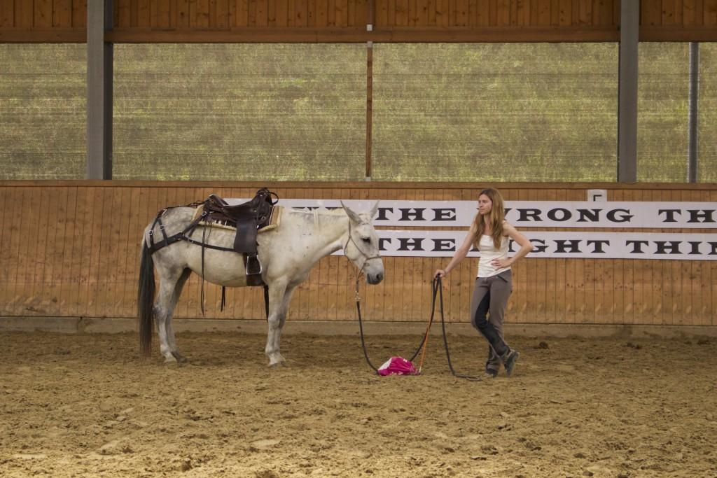 pferde verstehen, warwick schiller