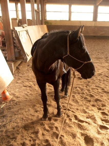 Aufsitzen - Pferde verstehen Blog