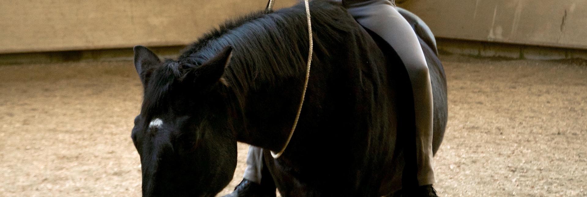 Dem Pferd Sicherheit geben