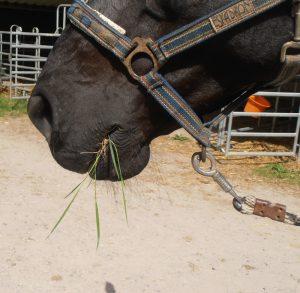 Pferde verstehen Blog
