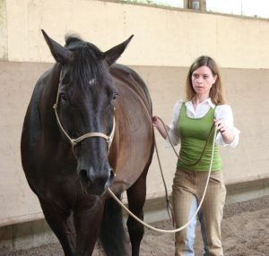 Sie sucht ihn pferd