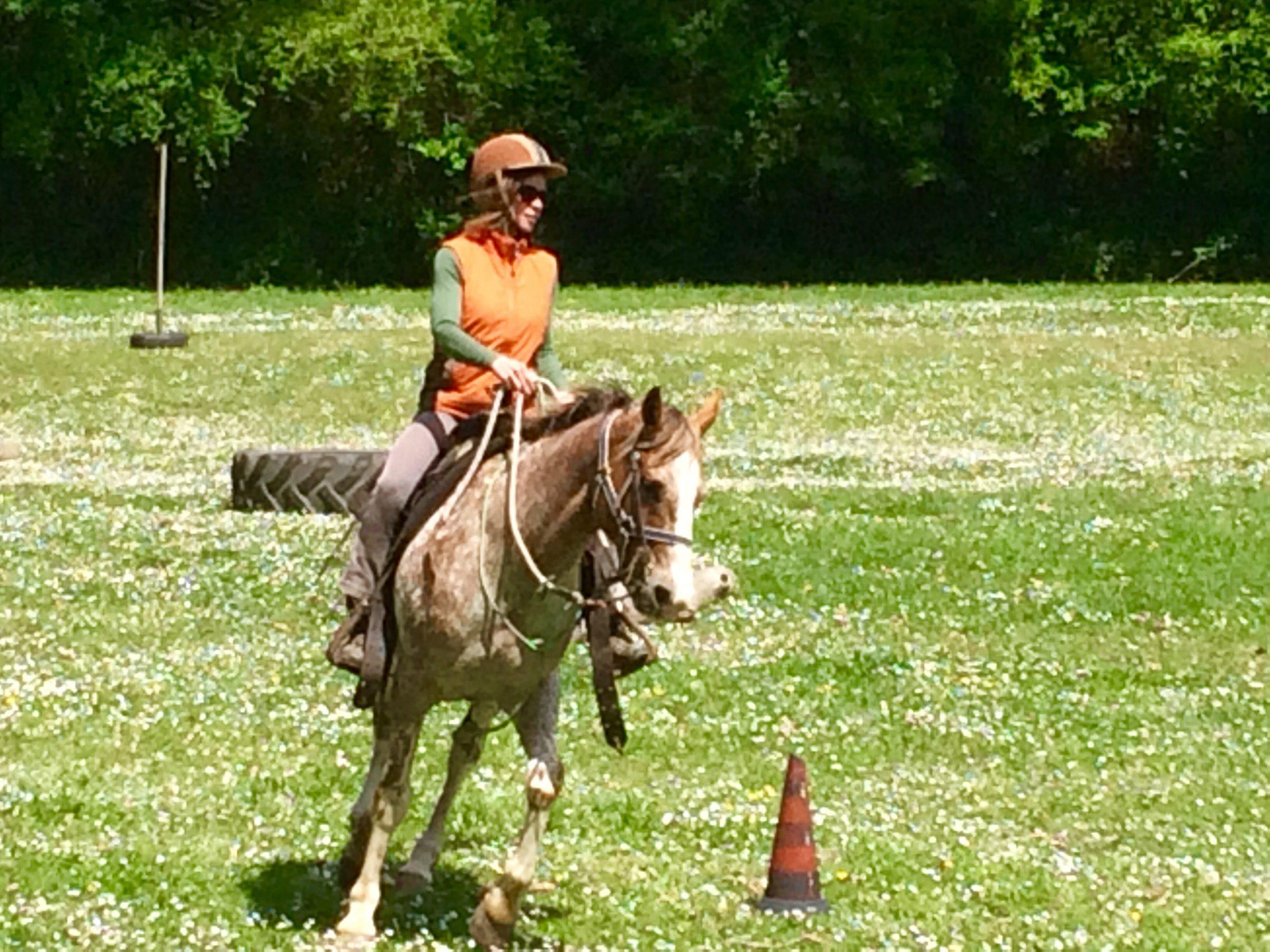 Harmonie mit dem Pferd, Pferde verstehen Blog