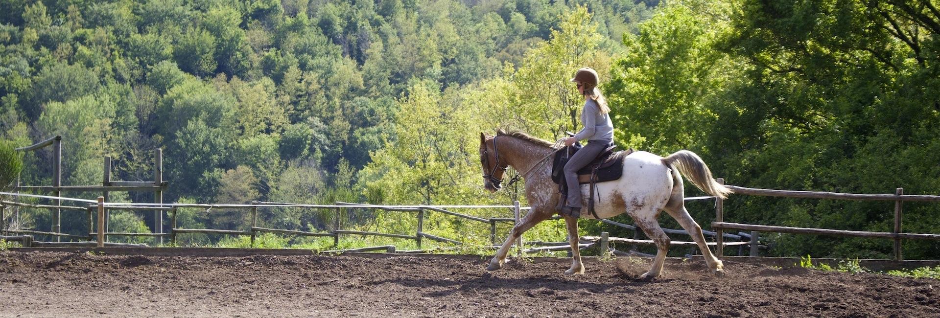 Die Essenz von Harmonie mit dem Pferd