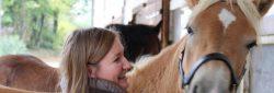 Druck und Pferde