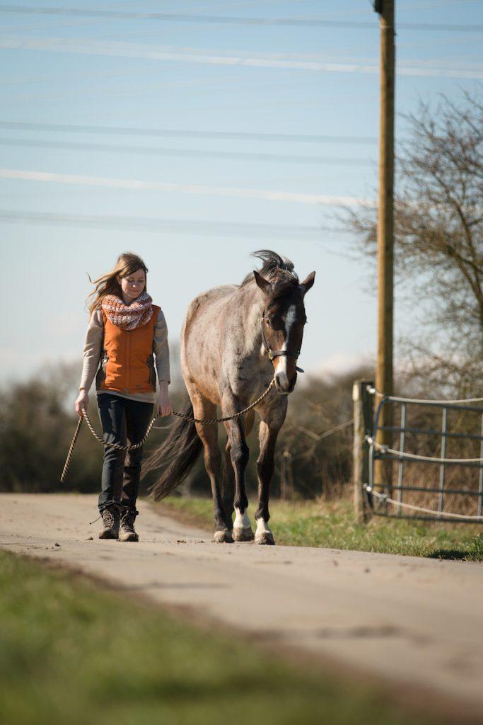 Spazieren gehen mit dem Pferd - Rückweg zum Stall.