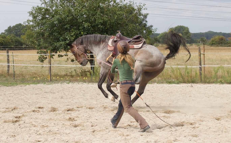 Nein sagen zum Pferd