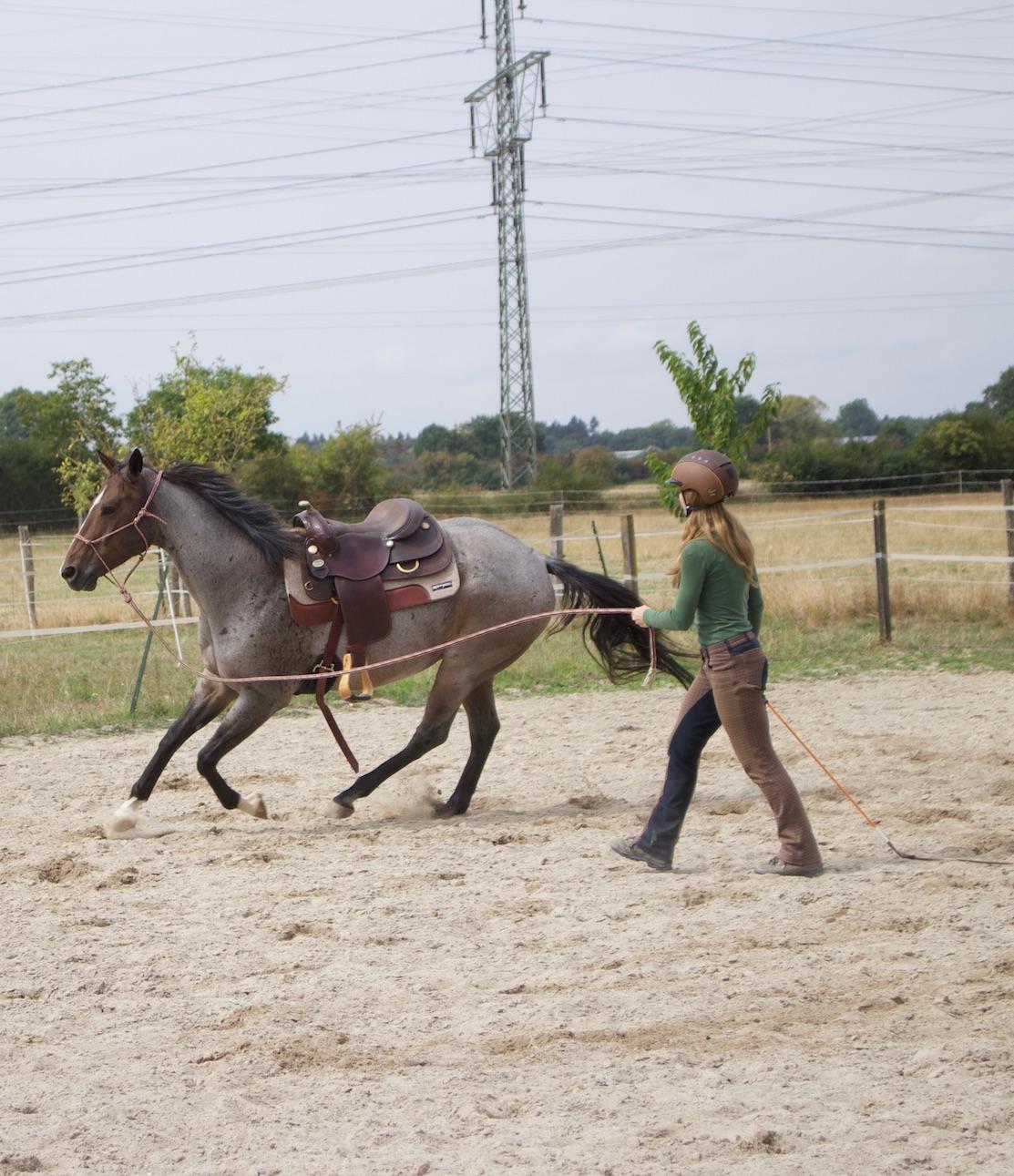 Hier hilft Hinterhand weichen: Pferd wird zu schnell