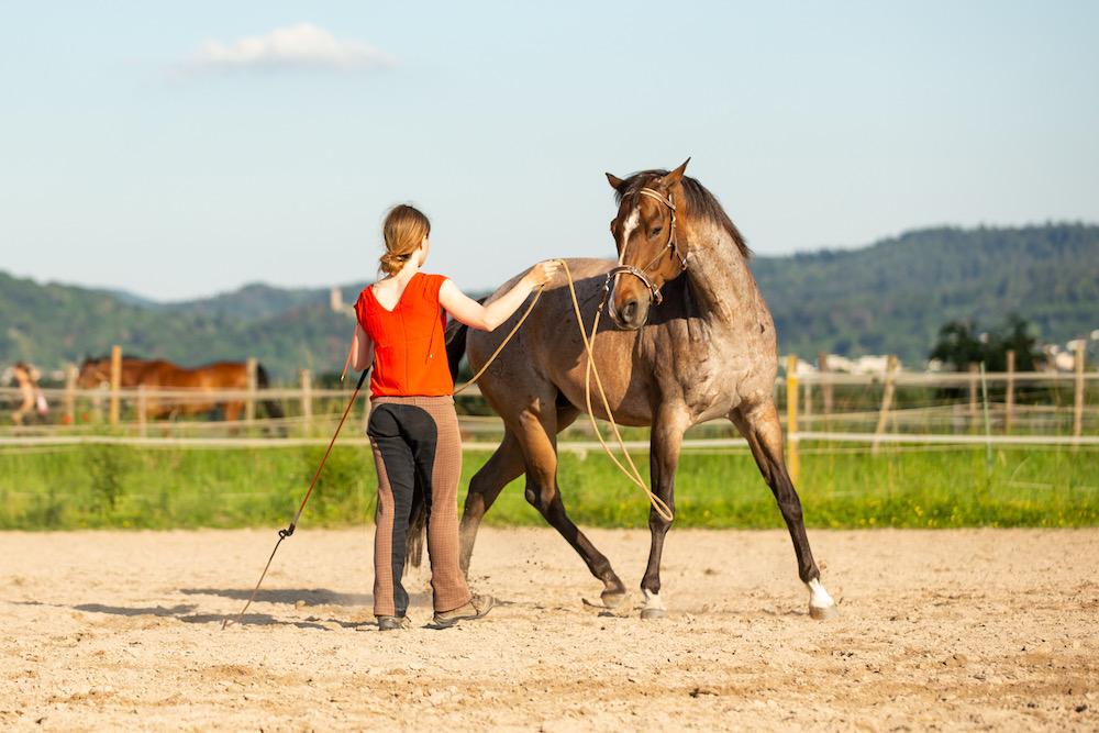 Hinterhand weichen: Pferd kreuzt