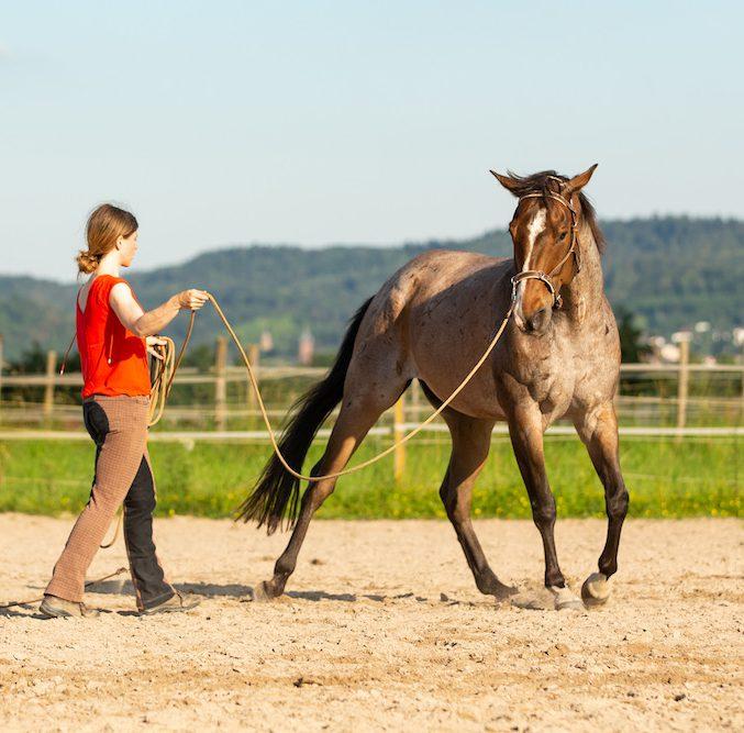Hinterhand weichen: Pferd macht die Schulter auf