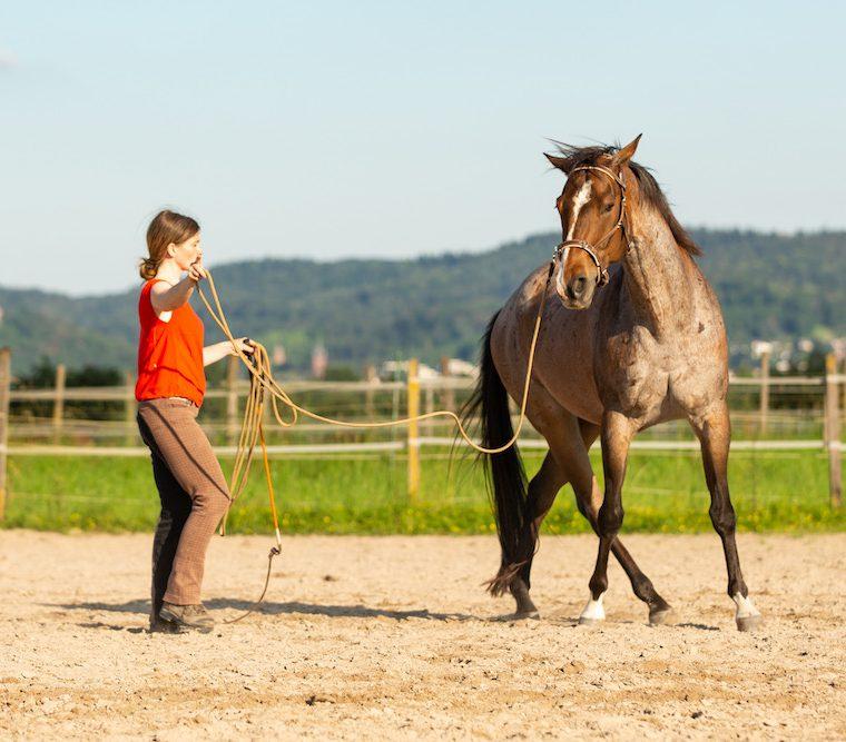 Hinterhand weichen: Pferd findet aus dem Kreuzen ins Vorwärts