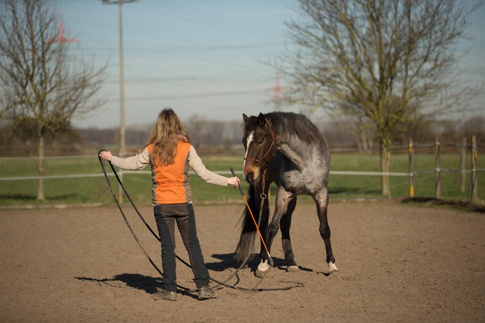 Knotenhalfter, Rope und Stick sind als praktische und bequeme Ausrüstung für Mensch und Pferd bei uns oft im Einsatz.