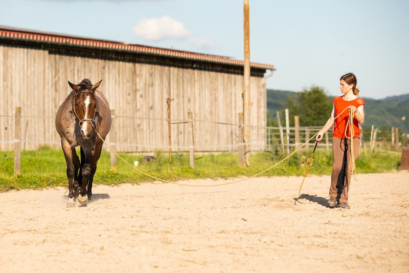 Guter Pferdemensch, Pferd mit Mensch, Longieren, Trab