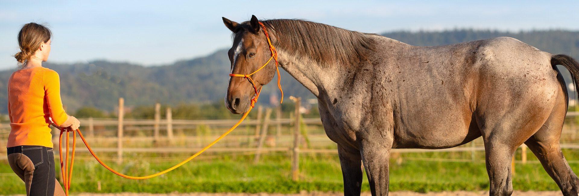 10 Dinge, die ich an dir mag/Mein Pferd rockt