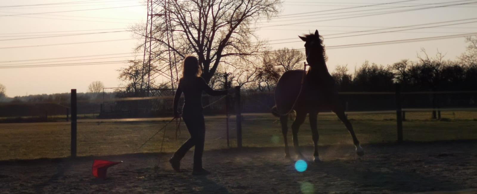 Der ultimative Post für die allerperfekteste Beziehung zu deinem Pferd – garantiert